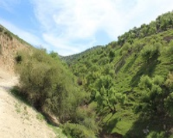 Trip to Yarmouk Forest Reserve with Wild Jordan